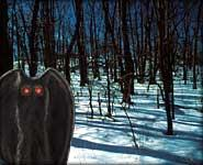 The Selling of Mothman