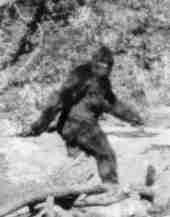 Alleged photo of Bigfoot